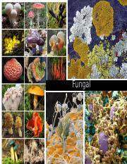 ECOL182 Fungal Diversity Notes