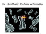 Gene mutation, DNA repair, and transpostion