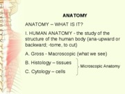 Anatomy Intro