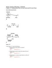 Ch 11 - Human Anatomy Physiology 7e(Marieb Chapter 11