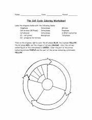 cell cycle coloring worksheet - Name DaTe Period The Cell Cycle ...