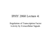 Lecture 4 Regulation of Transcription Factor Activity by Extracellular Signals