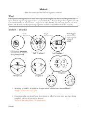 APB- Meiosis POGIL.pdf - Meiosis How does sexual ...