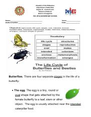 Activity Sheet in Science Life Cycle of Butterflies anf Beetles.docx