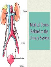 The%20Urinary%20System%207th%20ed.ppt