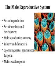 Male Repro.ppt