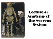 Lecture_4_Anatomy_of_the_Nervous_System