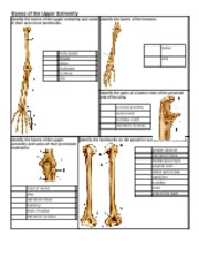 Chapter 7 - Labeling Bones of the Upper Extremity