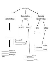 Chart for Tissue Types Student Copy
