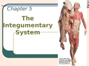 AP 1 CH 5 Lect. PP  The Integumentary System - studen