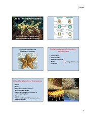 Lab 8 - Echinoderms and Chordates