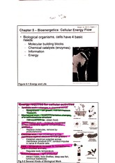 bioenergetics notes with highlighted key terms-2