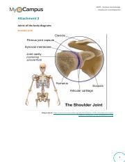 AAP01-Attachment 2 Joints of the body diagrams.pdf