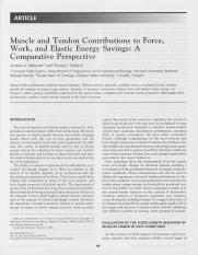 Muscle_and_Tendon_Contributions_to_Force_Work.2