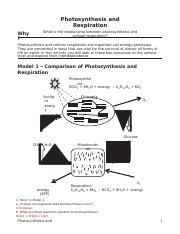 photosynthesis and respiration - Photosynthesis and ...
