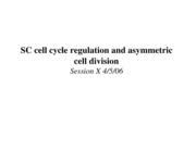 SC cell cycle regulation and asymmetric cell division
