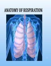 Anatomy of Respiration Student Fa2016.pptx