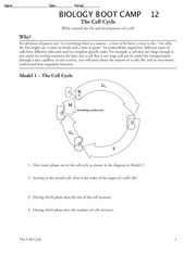 Worksheets The Cell Cycle Worksheet With Answer the cell cycle worksheet biology label and describe each phase of