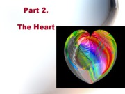 Bio 260 heart and circulation
