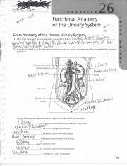 BSC2085L Exercise 4 Review Sheet The Cell Anatomy and 4916358 ...