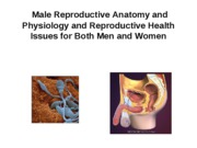 Outline Male sex anatomy Physiology lecture W09