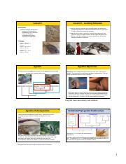Lecture 6 (6 slides per page) Spring 2016