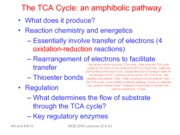 Lectures 22 & 23 The TCA Cycle-BW
