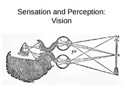 5+Sensation+and+Perception+Vision - lecture Psych/Neuro 3515
