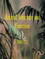 112 06 ch32,40 animal structure
