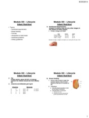 Module-13-Lifecyle-Infant-Nutrition-four-slides-per-page