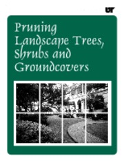 Pruning Landscape Trees, Shrubs and Groundcovers