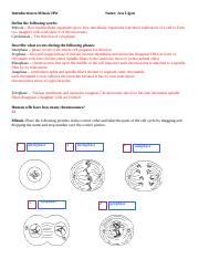 Intro_to_mitosis_HW1718 (2).doc