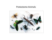 Protostome Animals Outline