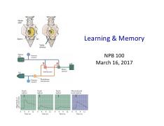 NPB100 19 Learning and Memory