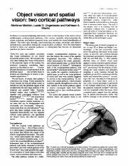 Mishkin, M., Ungerleider, L.G., and Macko, K.A.  Object vision and spatial vision- two cortical path