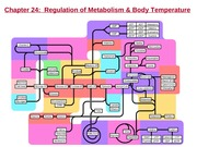 DL ANP1107A Metabolism lecture 3 Feb 4 2015