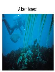 L01_Urchin+barren+and+kelp+forest+pictures.ppt