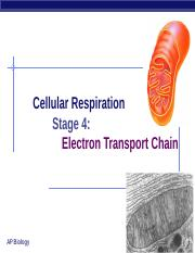 Electron Transport Chain PowerPoint.ppt