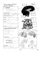 Cerebrum Notes