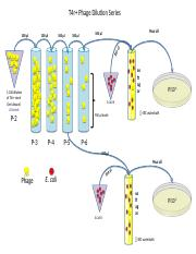 Antibody Neutralization Lab Diagram.pptx