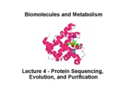 Biomolecules Lecture_4_Proteins