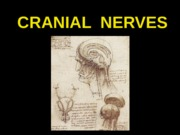 ANP 300 - Lecture 12 - Cranial Nerves