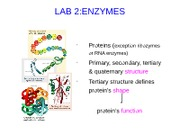 Lab #2 - Enzymes