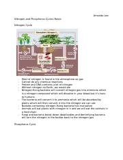 Nitrogen and Phosphorus Cycle Notes.docx