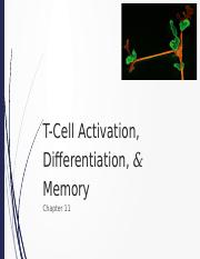 181 - 10 - T Cell Activation.pptx