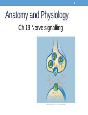Lecture 14. annotatedChapter 19 Nerve Signalling.pptx