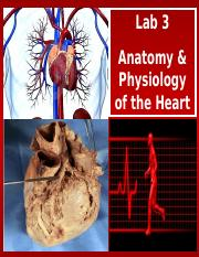 A&P of the Heart - Lab.ppt