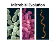 11 .Microbial Evolution