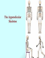 Bio 201 Appendicular Skeleton 14.ppt