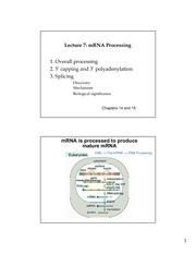 Lecture 7 mRNA processing (2 per page)